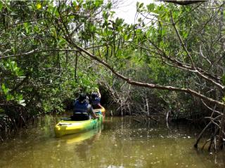 Mangrove Trail Screenshot