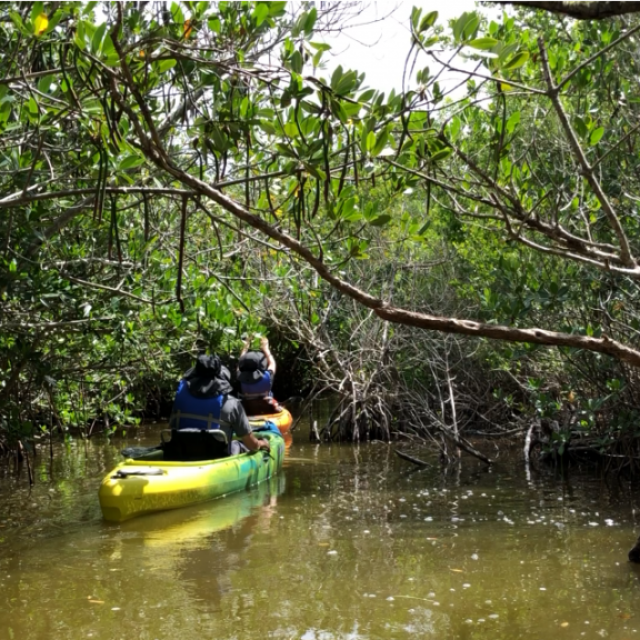 Mangrove Trail Screenshot